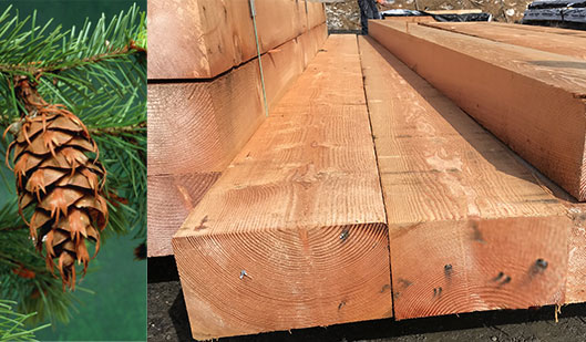 Douglas fir timber specie, Dfir
