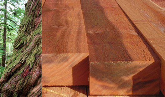 Western red cedar timber specie, WRC